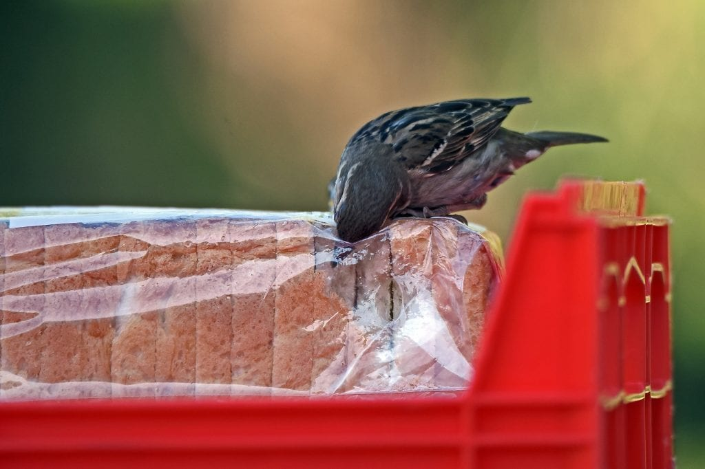 a bird trying to steal bread from inside the package is one tf the things to avoid when going to Barcelona